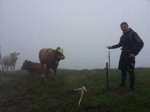 Freundliche Kühe